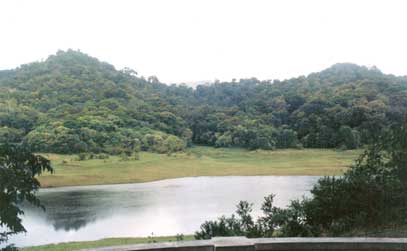 Tropical Evergreen Forests Tropical evergreen forests are a dominant part of the natural vegetation in india. tropical evergreen forests